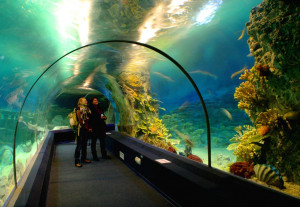 Сочинский океанариум