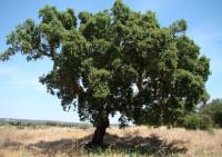 Деревья рекордсмены