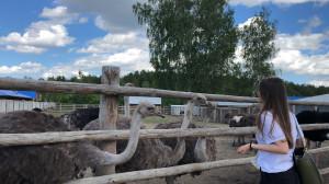 Африканские страусы в Костроме
