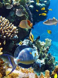 Красное море - идеальный морской мир