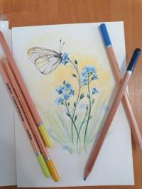 Бабочки. Порхающее волшебство
