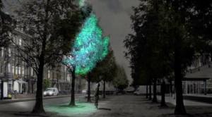 Биолюминесцентные деревья будущего