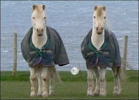 Лошади рекордсмены